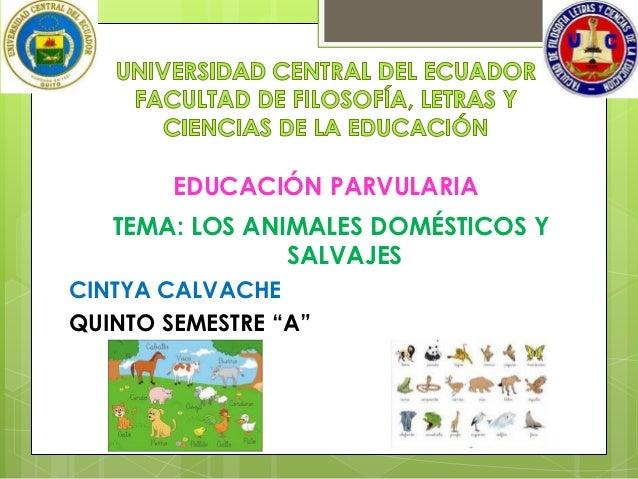 """EDUCACIÓN PARVULARIA   TEMA: LOS ANIMALES DOMÉSTICOS Y                SALVAJESCINTYA CALVACHEQUINTO SEMESTRE """"A"""""""