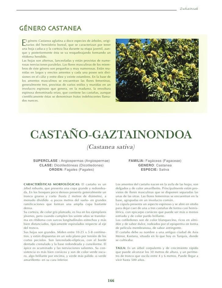 ZuhaitzakGÉNERO CASTANEAE   l género Castanea aglutina a doce especies de árboles, origi-    narios del hemisferio boreal,...