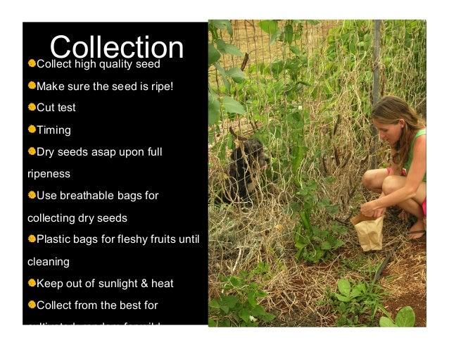 The seeding anthology disc 2 scene 5 4