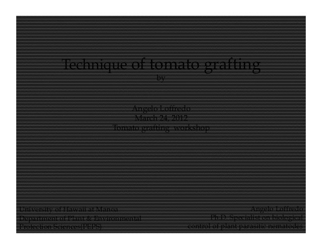 Technique of Tomato Grafting