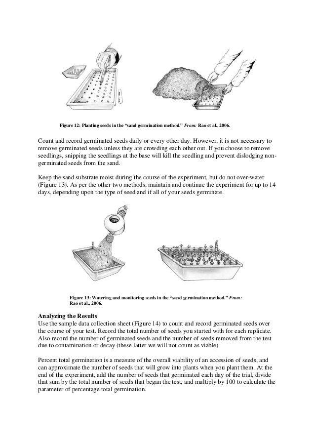 ragdoll method seed germination