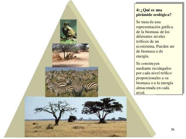 Presentación Tema 6. Ecología