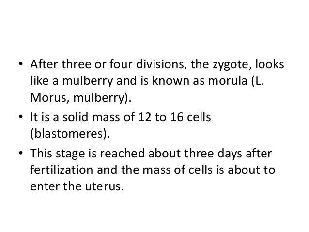 zygote definition biology