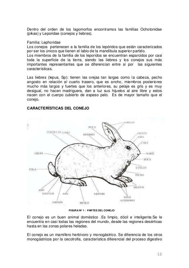 Bonito Anatomía Cabeza De Conejo Ideas - Anatomía de Las Imágenesdel ...