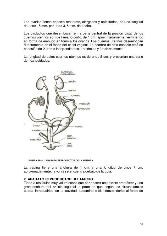 Atractivo Anatomía Genital De Conejo Bandera - Imágenes de Anatomía ...